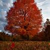 JPG-DLS-Nov2011-_MG_0901_HDR-2