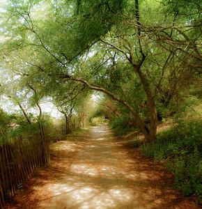 Sunken Meadow walk