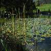 Arboretum Aubonne 15 10 2006 (13)