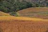 Napa_and_Sonoma_RainNovember_16,_20121N5A6545untitled