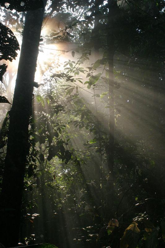 """""""Rays of Hope""""<br /> Ecuador, Amazon Rainforest, Yachana Lodge<br /> On a misty morning, rays drift through the canopy and spread light across the forest floor."""