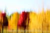 Trees_motion_2O7A3135