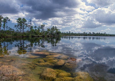 Pine Glades Lake, Everglades National Park, FL