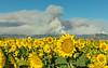 Guinda-County Fire 2018-8477