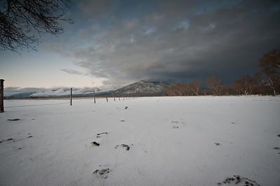 overland sheepskin-2