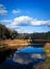 Alachua Sink<br /> Paynes Prairie Preserve State Park<br /> Florida<br /> © 2010