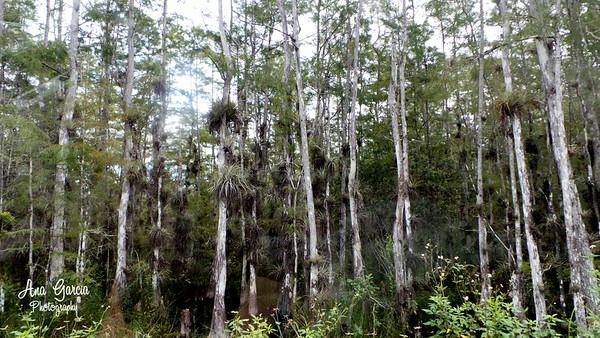 Big Cyrpress National Preserve - Loop Road