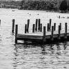 Black and White shot of Lake at Lake Anna State Park, Virginia