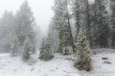 Blistery Winter Snow