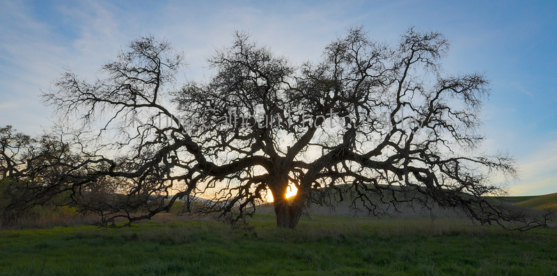 Bruce's Oak Sunset 2-17-20-2412