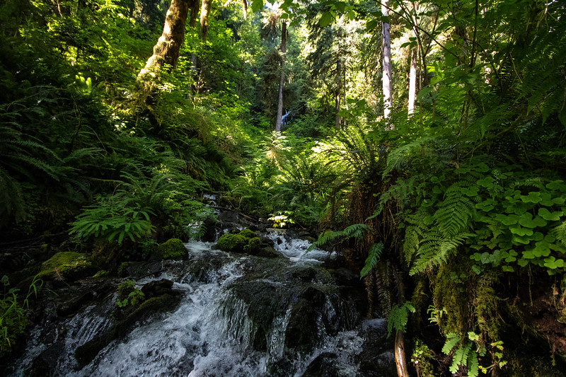 Landscape: Watertfall, Hoh Rainforest | Olympic National Park