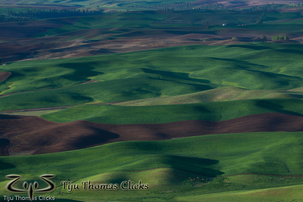 Wheat fields / Palouse / Washington