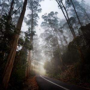 Mt Wilson, NSW, Australia