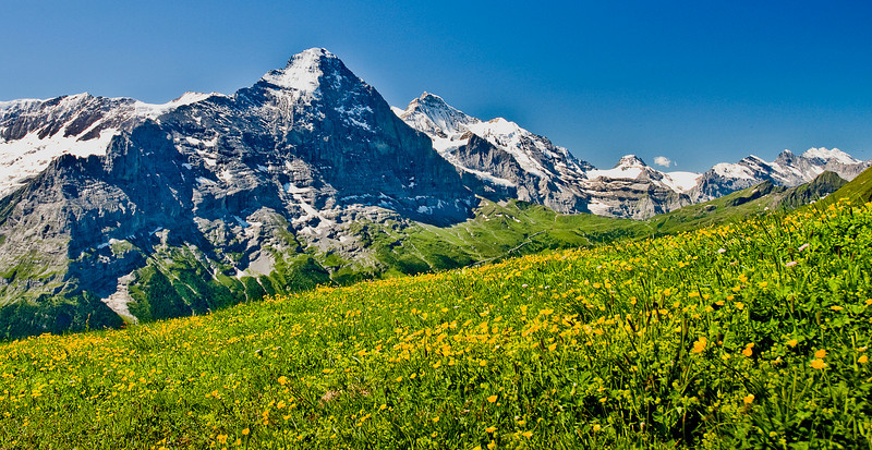 The Swiss alps are so full of life in the spring time.