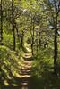 5369-dog-mtn-trail