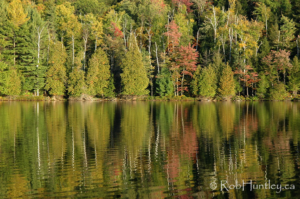 Autumn Reflection. Photograph - Forest reflected in Lac a la Truite, near Wakefield, Quebec.