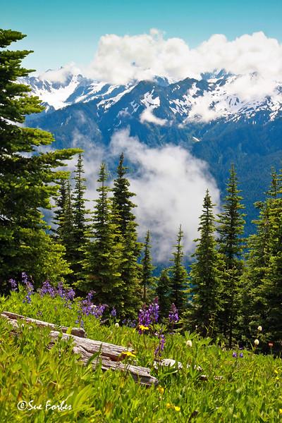 Mt Olympus<br /> Mt Olympus through the clouds from Bogachiel Peak, Olympic National Park