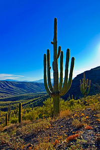 """Saguaro Magic"", Copper Creek, Pinal County, Az., 01/09/10"