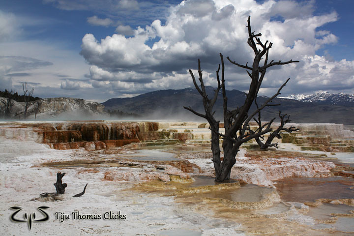 Mammoth Springs / Yellowstone / Montana - Wyoming