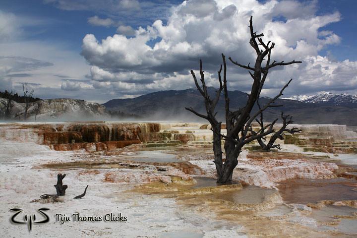 Mammoth Springs / Yellowstone / Montana - Wyoming