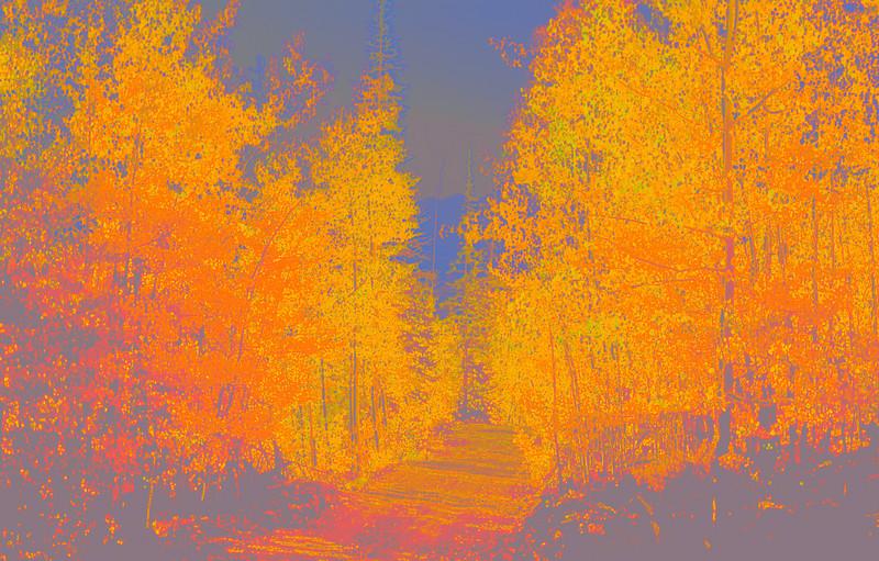 Aspen lined road near Blue Ridge