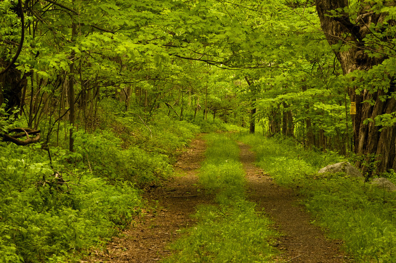 Trail from Duck Pond