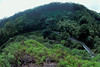 the road to Hana, Maui, Hawaii, ( Central Pacific Ocean )