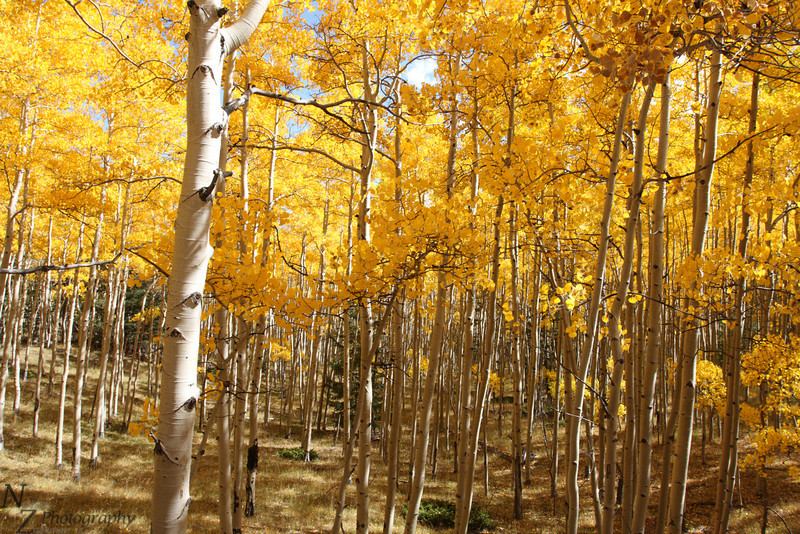 Fall Colors near Marshall Pass Colorado, September 29 2011.