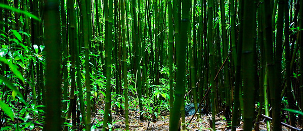 Maui Bamboo Forest
