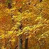 Fall Trees, Lake Maria State Park