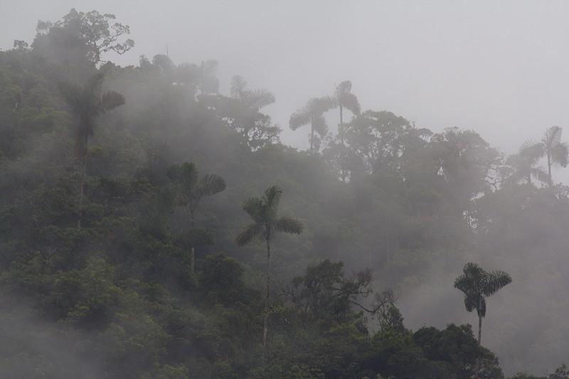 Manu National Park, Amazon, Peru
