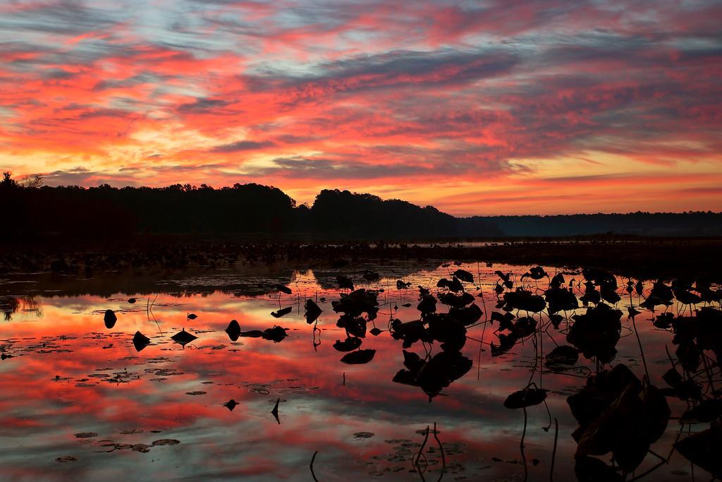 Sunrise, Lake Loakfoma, Noxubee National Wildlife Refuge
