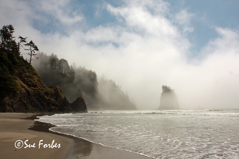 Teahwhit Head, Olympic National Park<br /> Fog clearing from Teahwhit head, Olympic National Park