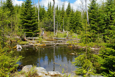 This freshwater pond, at the base of North Pole Mountain in New Brunswick, is fed by an underground spring.  There are no streams which flow into it, but the North Pole Stream begins here, flowing down the side of the mountain and meandering through the entire area.  Photo taken 30 May 2010.