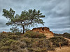 Torrey Pines Reserve, San Diego