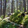 Borestone Mountain, Maine