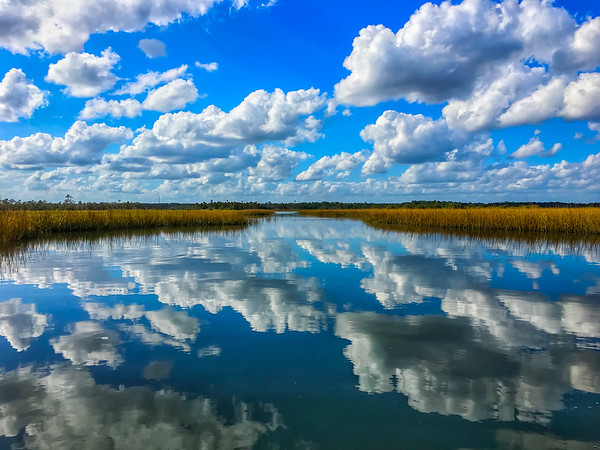 View of the Matanzas Wetlands From a Kayak