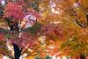 Changing Seasons Fall
