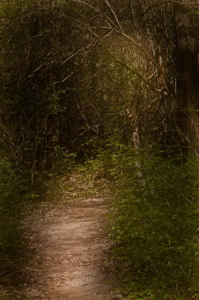 120 Shaw Garden 4-20-2008 - Path Through Woods (55mm warmsofteffects & burn)