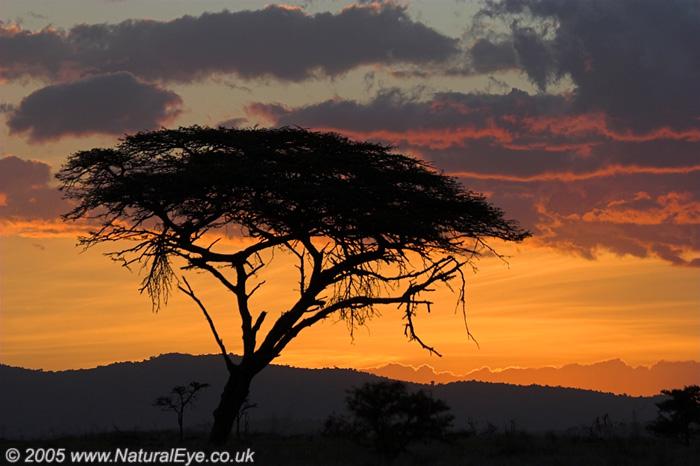 Sunset in the Maasai Mara