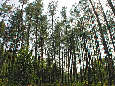Virginia Trip 2006 - Pine Grove 14 (wide)