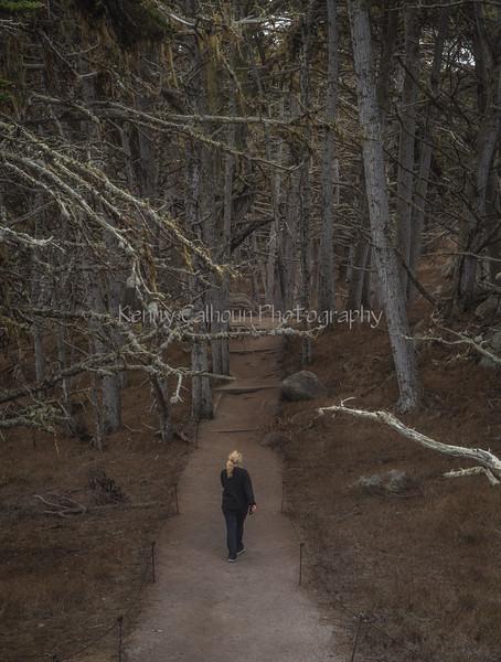 Point Lobos _N5A8374