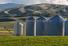 Tule Farms and Hungry Hollow_N5A6876