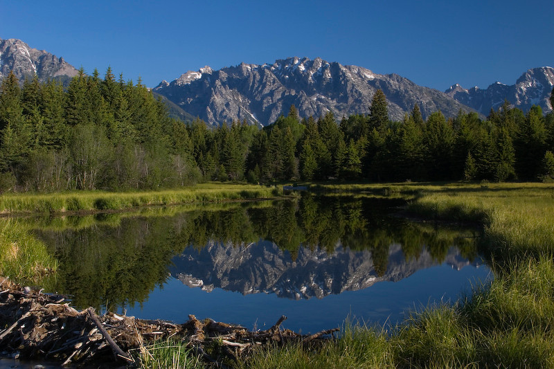 Beaver pond @ Schwabacher's Landing, Grand Teton National Park