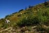 Mount St. Helens Area, Washington<br /> September 2008