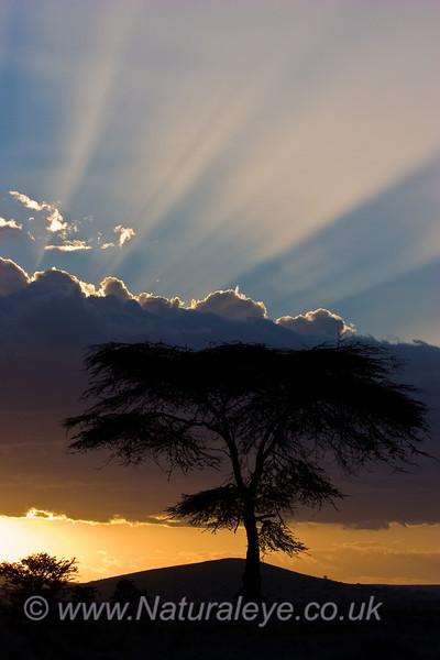 Sunrise in the Maasai Mara, Kenya