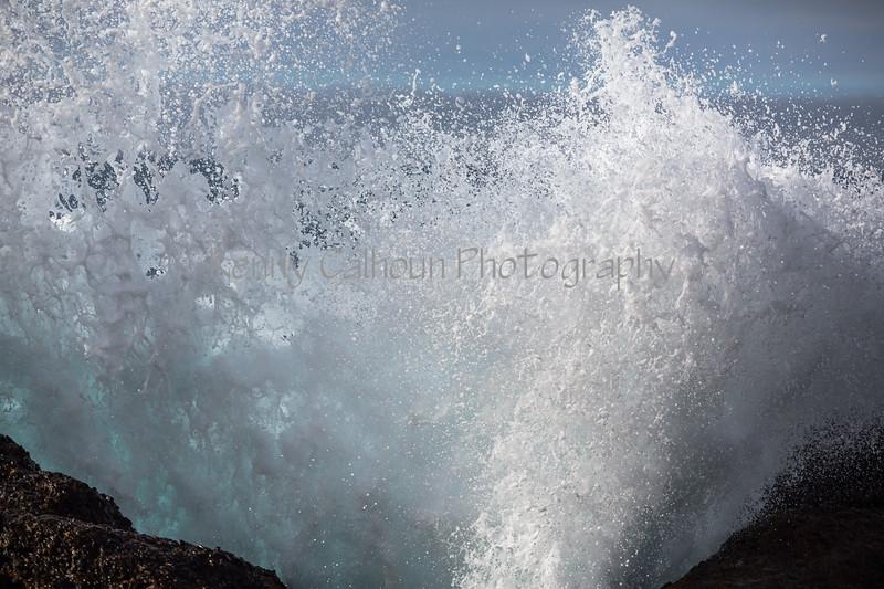 Point Lobos _N5A8668