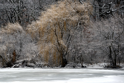 Landscape - Herrick Lake in the Winter