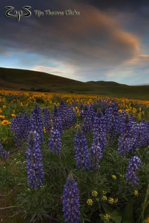 The Dalles / Wasington / Oregon