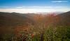 Mountain Ash from Blue Ridge Parkway